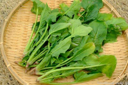 シュウ酸を多く含む野菜