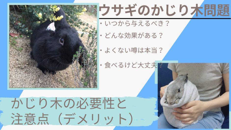 【歯の健康】うさぎにかじり木はいつから必要?よくない?木をかじらない、食べる、噛まない時の対処法を解説