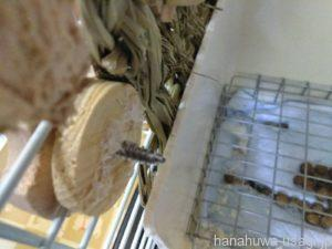 うさぎ用かじり木でおすすめしないオモチャ