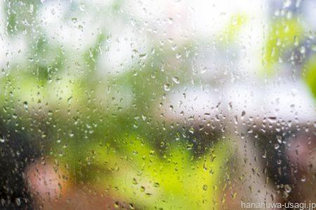 換毛期対策6.室温と湿度の急激な変化に注意する