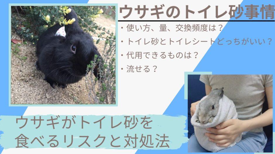 うさぎのトイレ砂使い方と食べる時の対処法【量、交換頻度、保管方法】猫用で代用できるのか解説
