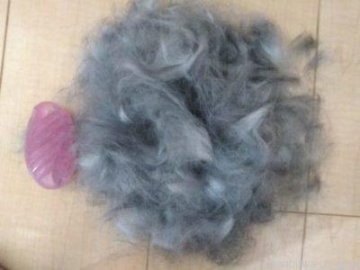 うさぎの抜け毛がすごい…大量に抜けるのはなぜ?