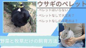 【悪影響説】うさぎにペレットはいらない?野菜や牧草だけで飼育する方法や注意点を紹介