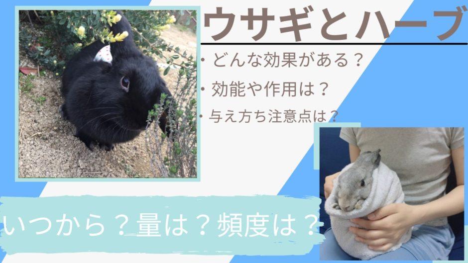 【効果効能】うさぎが食べられるハーブ一覧表~いつから?量は?与え方と注意点も紹介