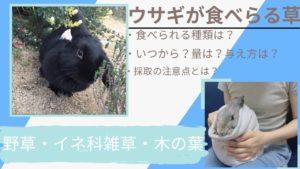 【写真でわかる】うさぎが食べられる野草・イネ科雑草・木の葉一覧表~いつから?量は?与え方と採取方法の注意点を紹介