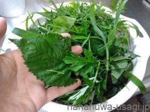 旬のハーブや野草は単調な食生活の良い刺激になる