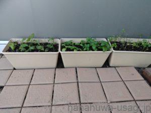 うさぎに安心安全なハーブをあげたいなら自家栽培がおすすめ