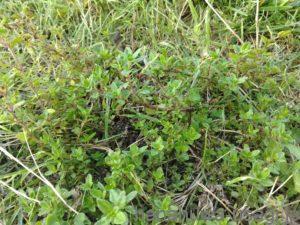 うさぎに安心安全な野草をあげたいなら自家栽培がおすすめ