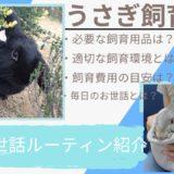 【完全ガイド】うさぎの上手な飼い方とは?必要なものはなに?適切な飼育環境、毎日のお世話すべて解説